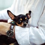 5 essential steps to decide the best dog breed for you