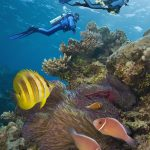 Queensland Highlights from Lonely Planet's Atlas of Adventure