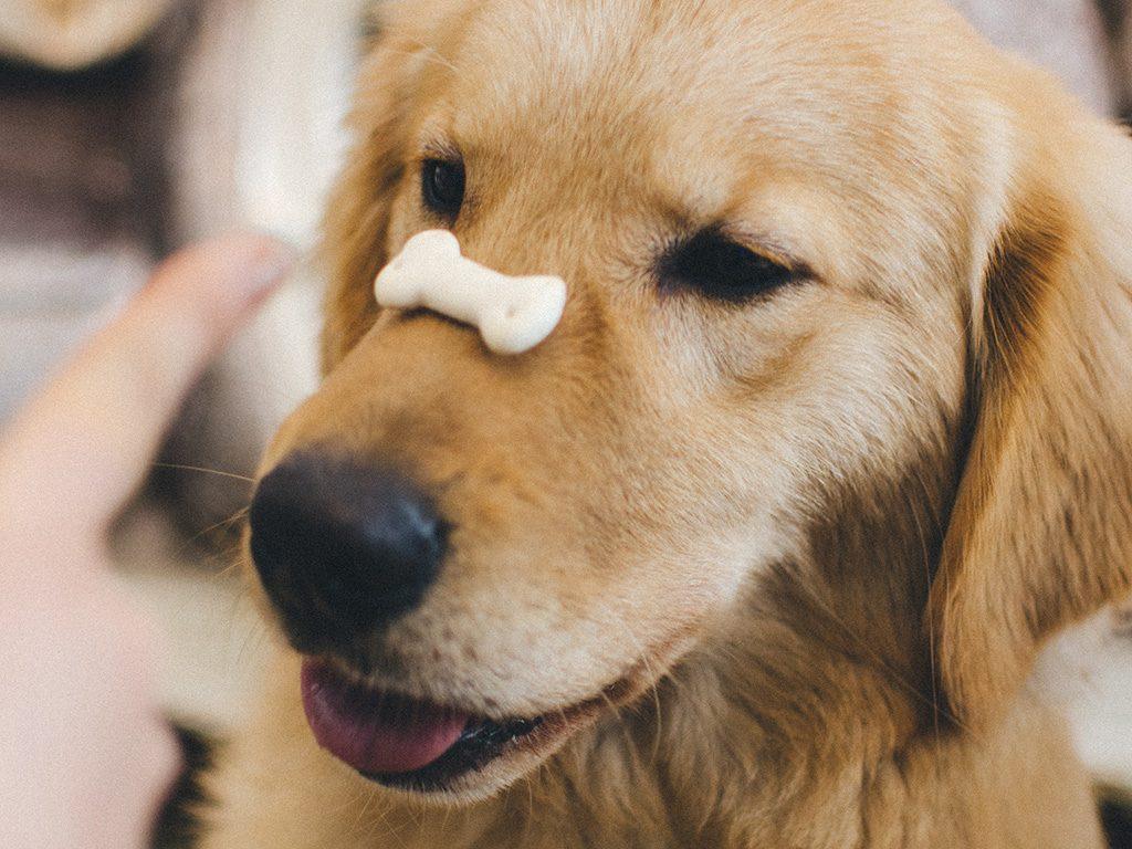 dog eating treat food healthy