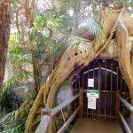 glow worm caves mountain tamborine